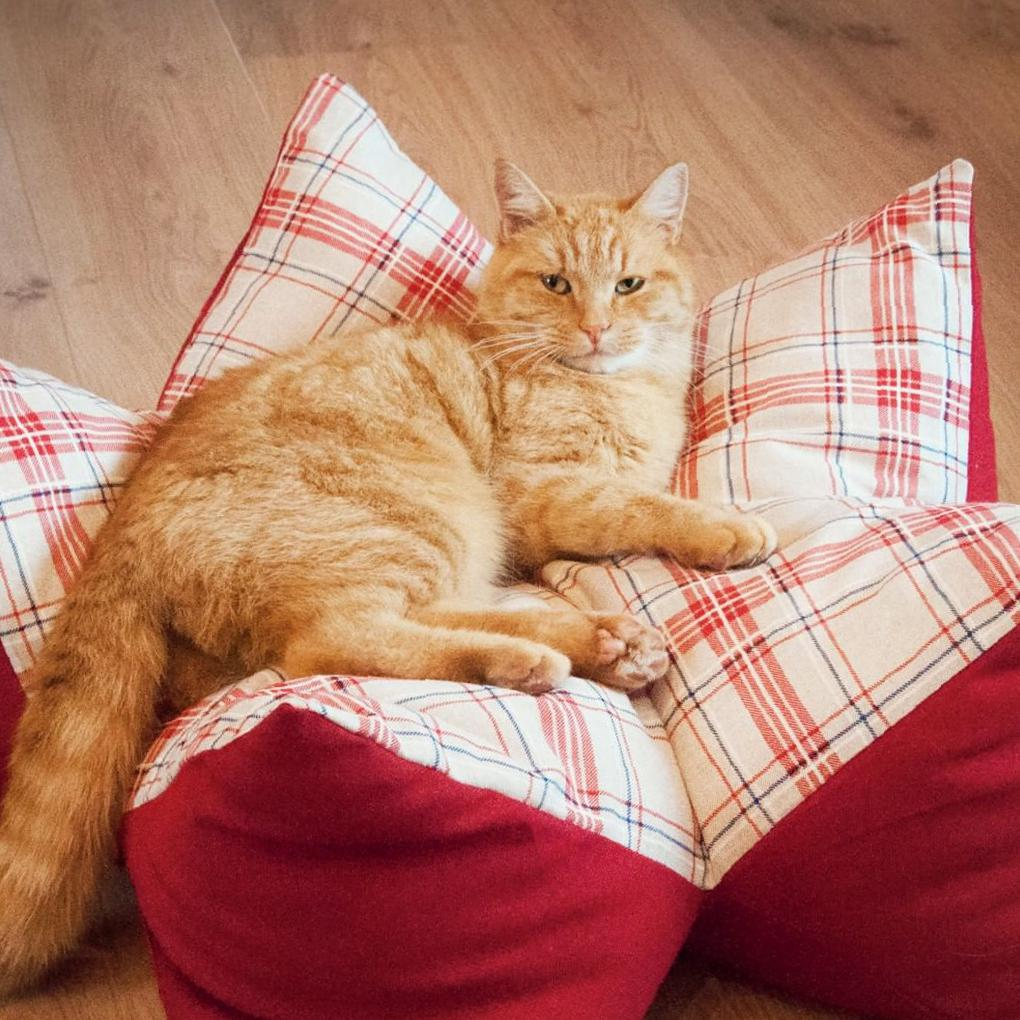Several Pets Suitable for Families with Children at Home pets, pet choice, pets for children, pets ideas, suitable pets for children