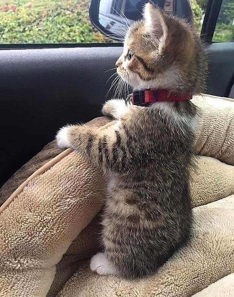 Several Reasons Your Crazy Cat Obsession Makes You Happier the benifts of keeping cat,the reasons of keeping cat,cat lover,keep cat,cute cat