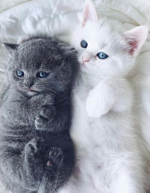 35 Smart and Cute Cats for You None
