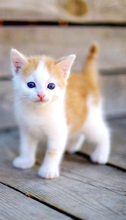 35 cute cat pictures to warm your heart Funny Cat Photos